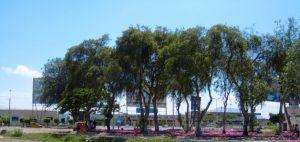 Aeropuerto de Chiclayo