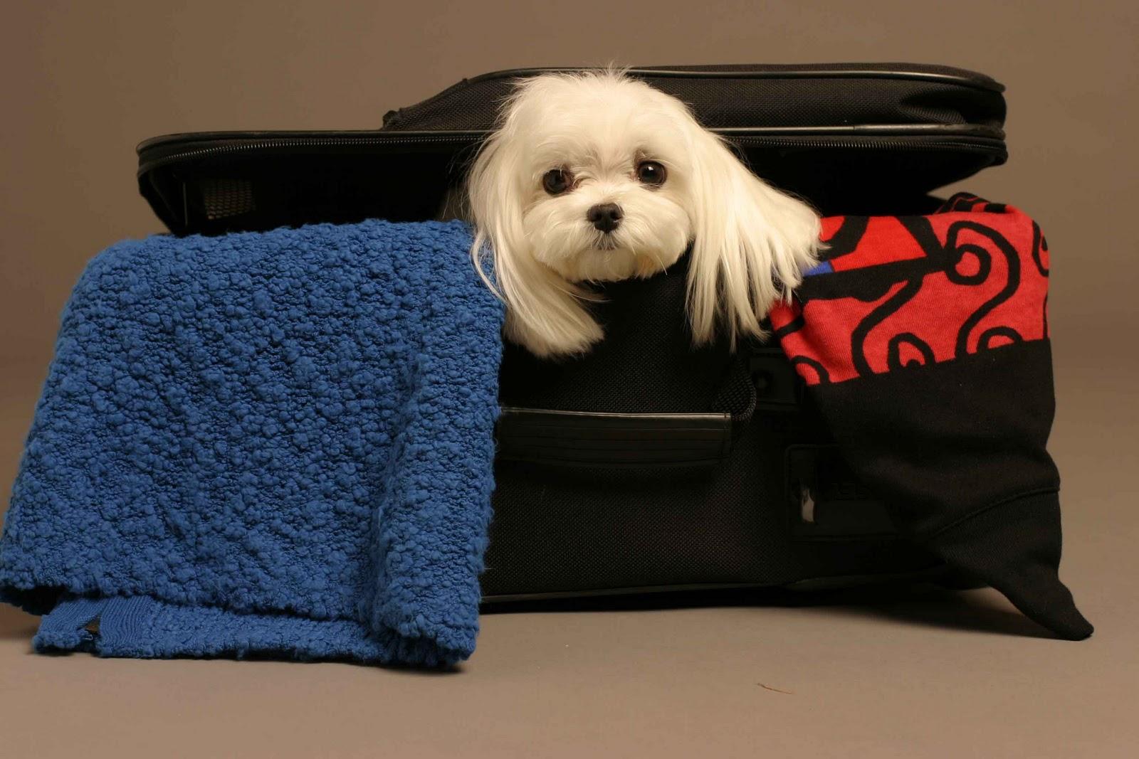 viajar-con-animales